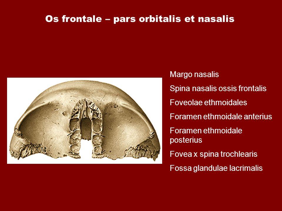 Os frontale – pars orbitalis et nasalis