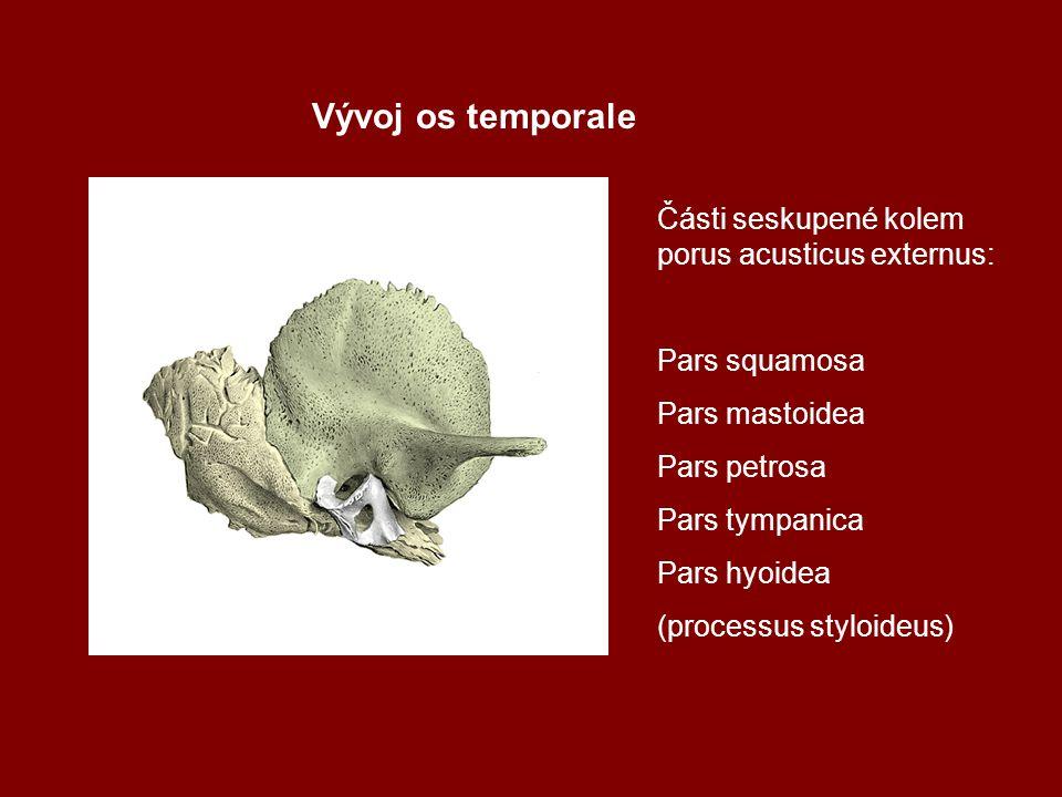 Vývoj os temporale Části seskupené kolem porus acusticus externus: