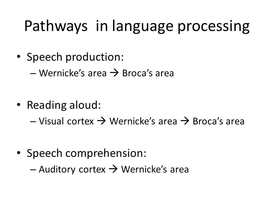 Pathways in language processing