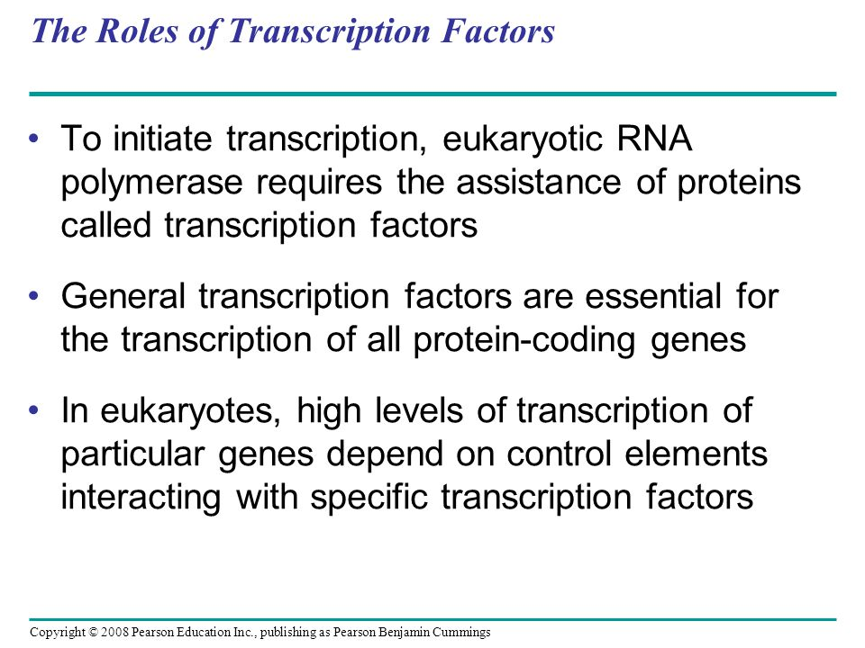 The Roles of Transcription Factors