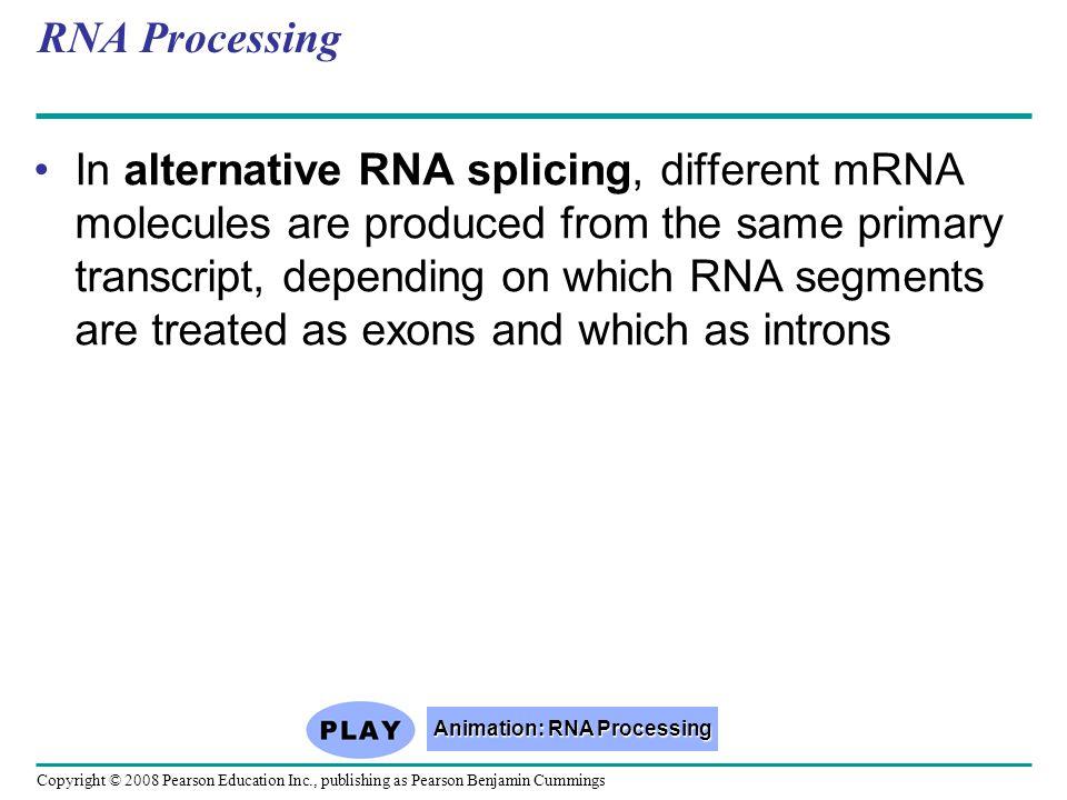 Animation: RNA Processing