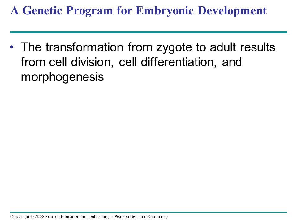A Genetic Program for Embryonic Development