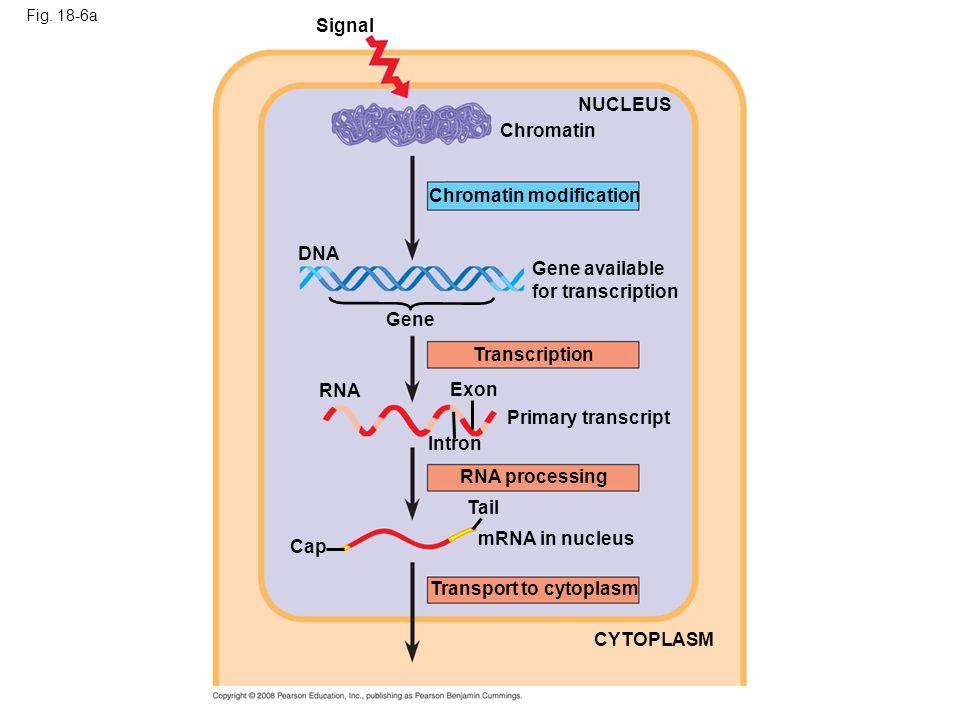 Chromatin modification