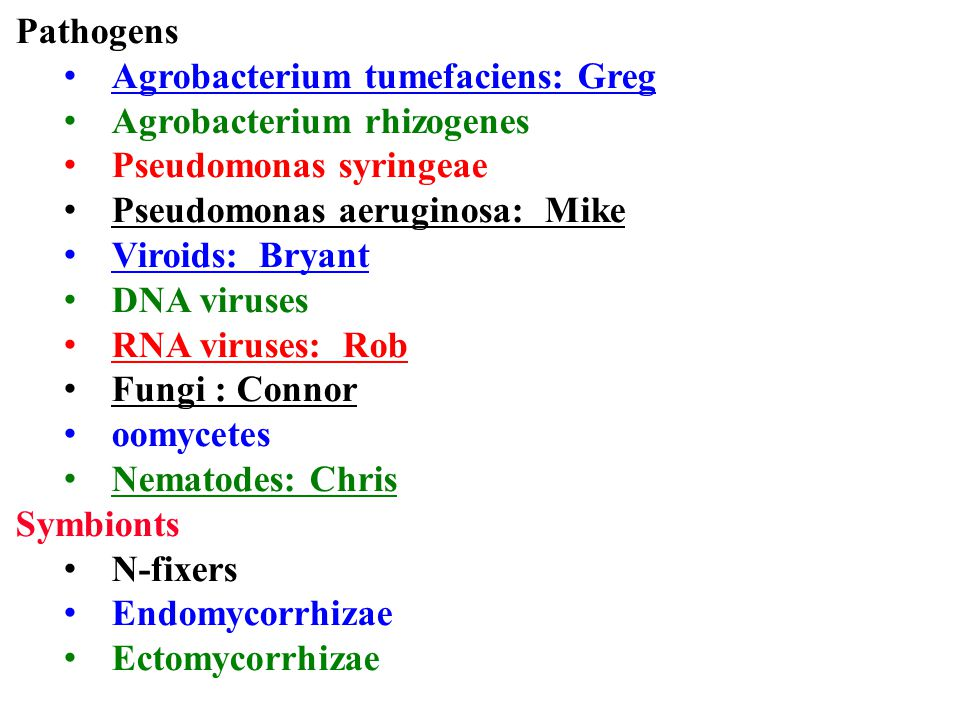 Pathogens Agrobacterium tumefaciens: Greg. Agrobacterium rhizogenes. Pseudomonas syringeae. Pseudomonas aeruginosa: Mike.