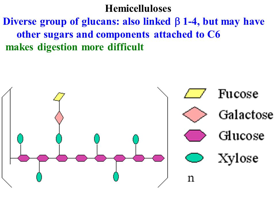 Hemicelluloses Diverse group of glucans: also linked b 1-4, but may have other sugars and components attached to C6.