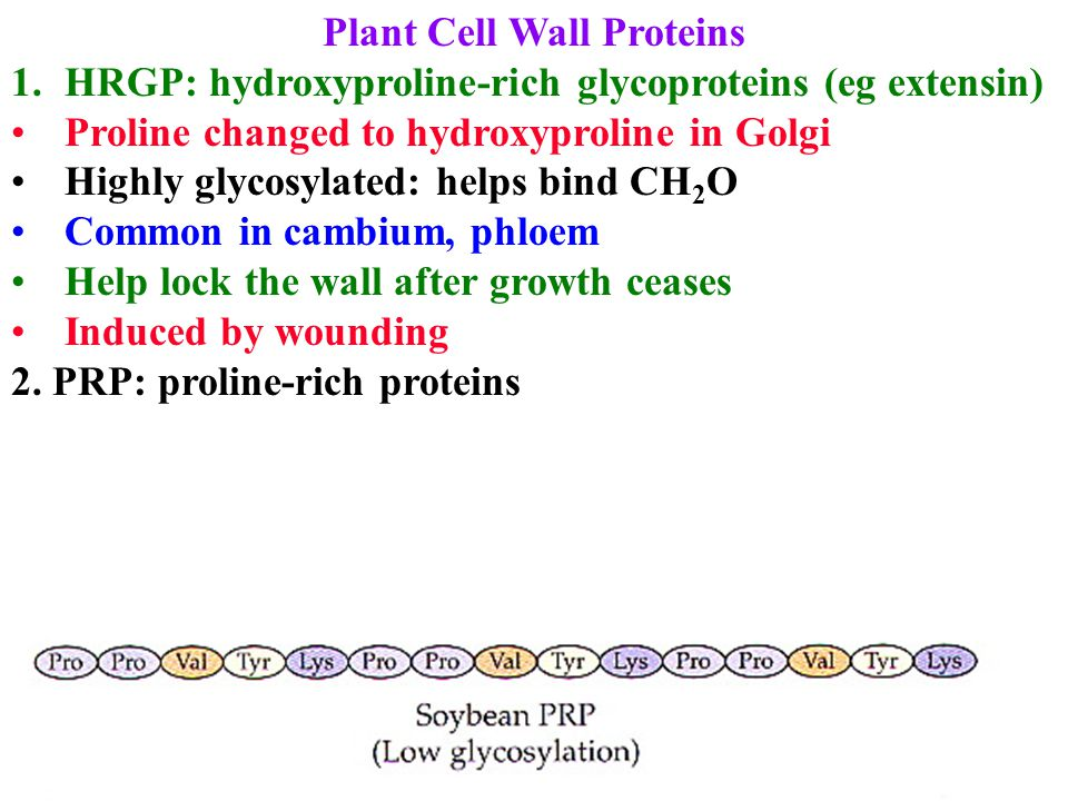Plant Cell Wall Proteins