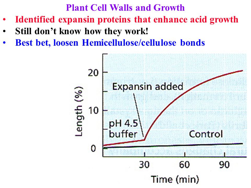 Plant Cell Walls and Growth