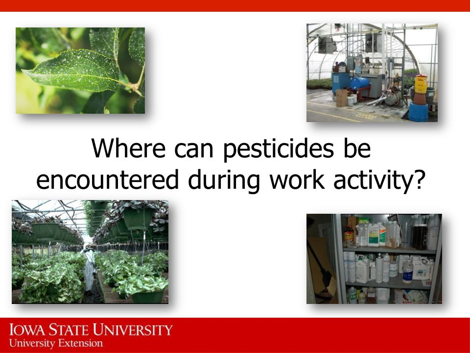 Where can pesticides be encountered during work activity