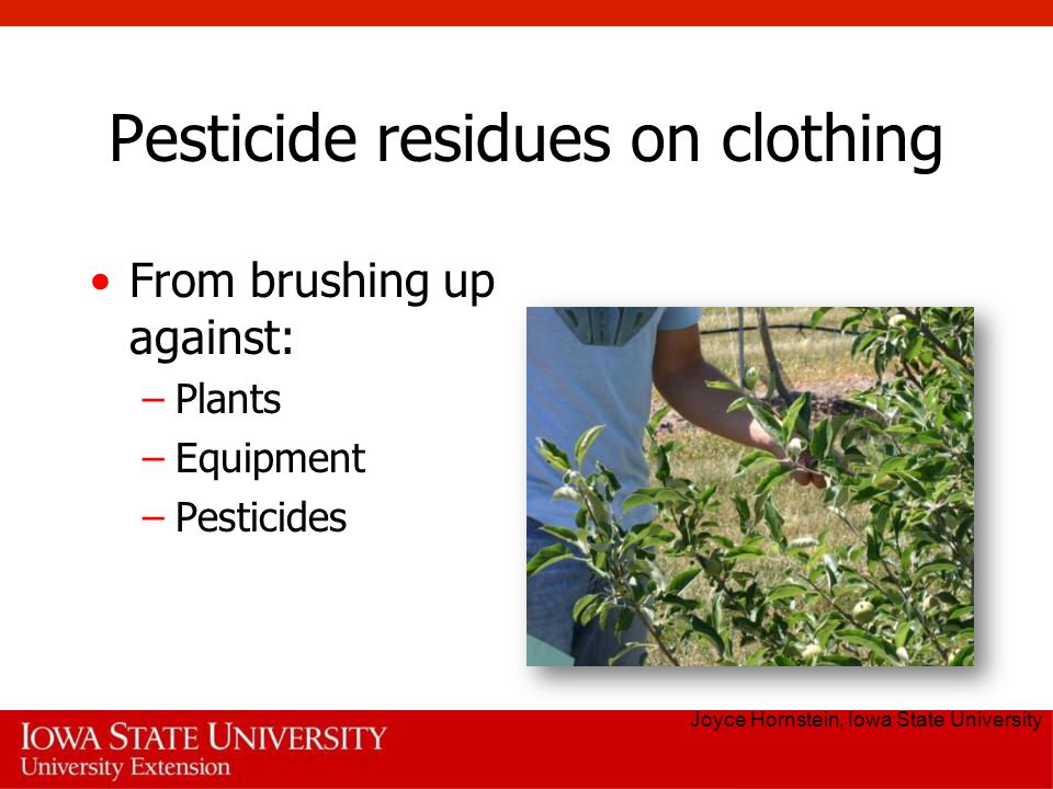 Pesticide residues on clothing