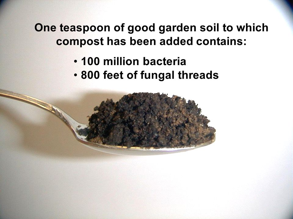 One teaspoon of good garden soil to which compost has been added contains: