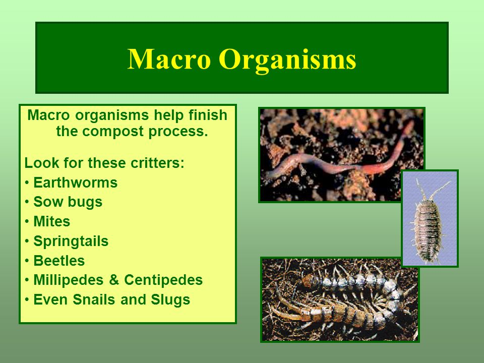 Macro organisms help finish the compost process.