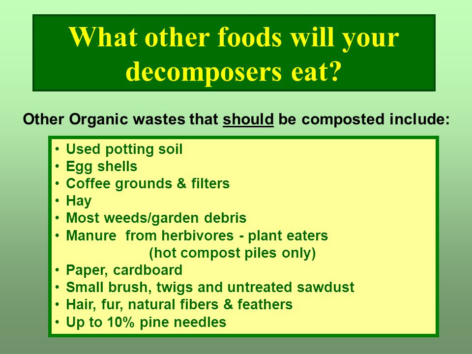 What other foods will your decomposers eat