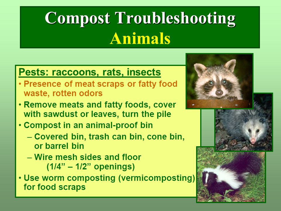 Compost Troubleshooting Animals