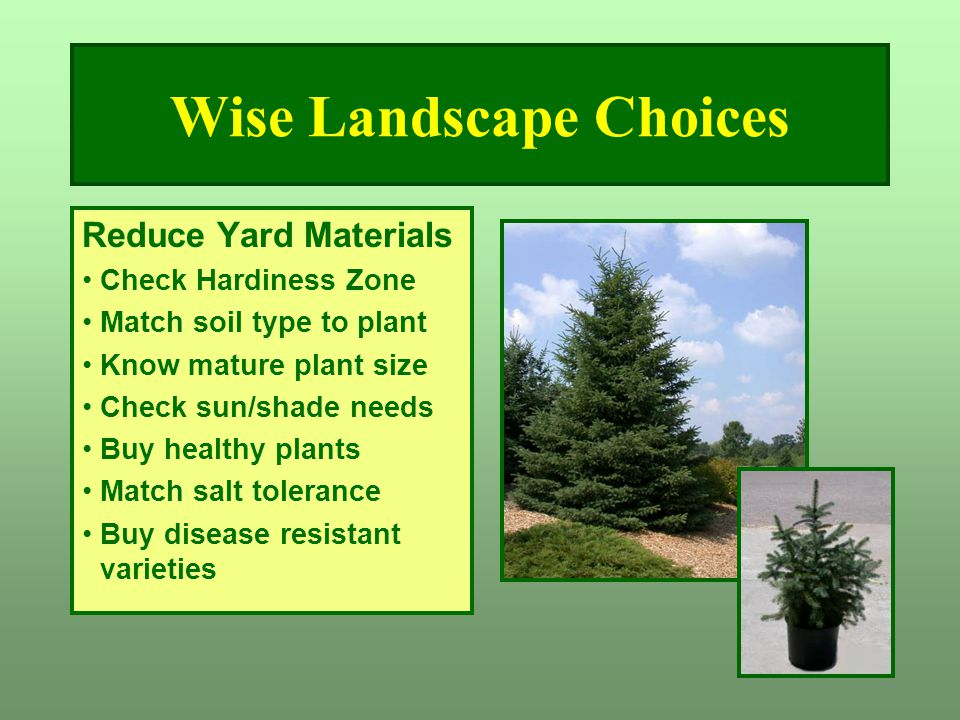 Wise Landscape Choices