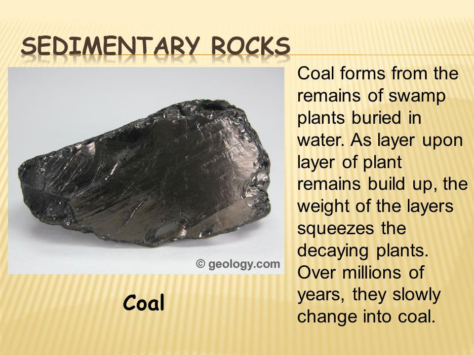 Sedimentary rocks Coal