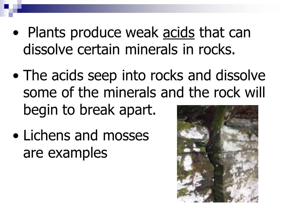 Plants produce weak acids that can dissolve certain minerals in rocks.