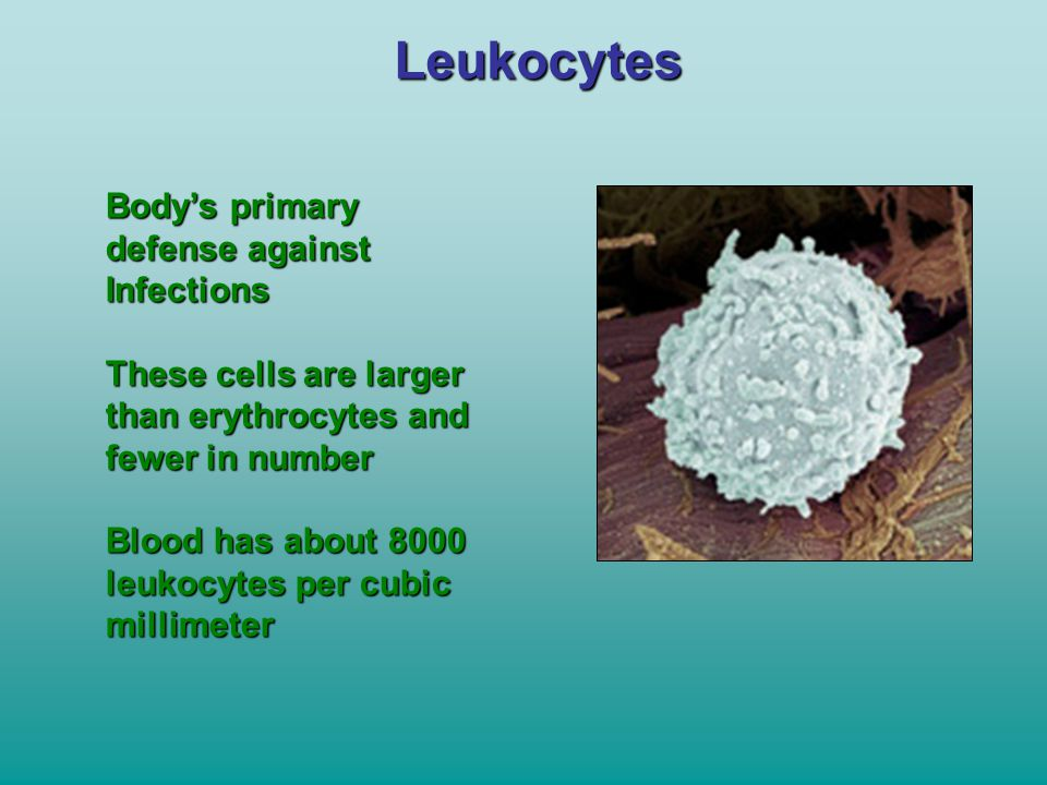 Leukocytes Body's primary defense against Infections