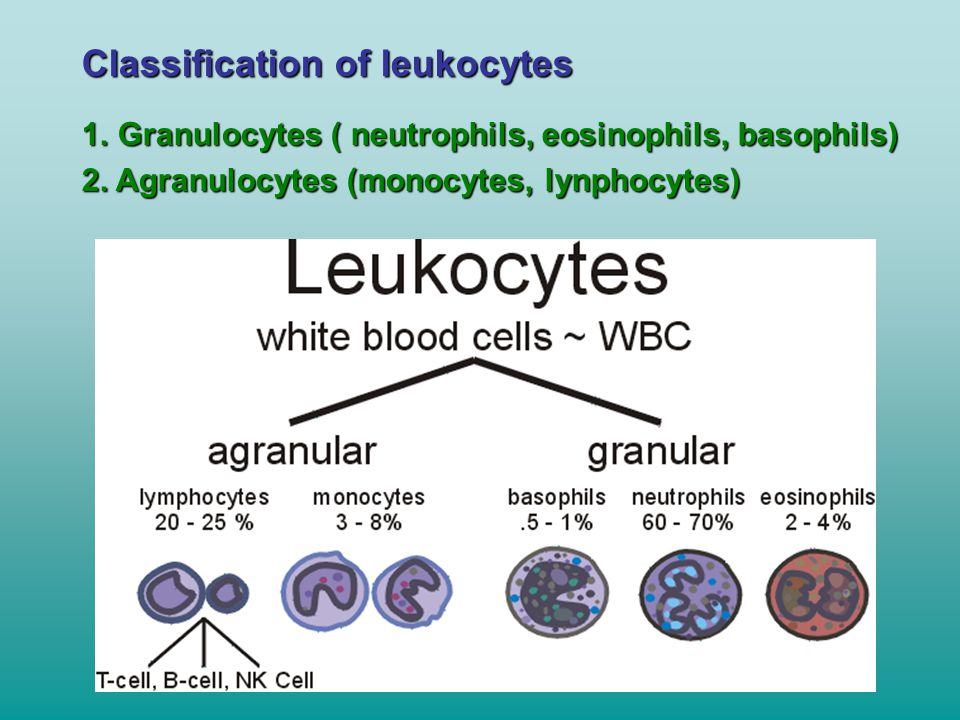Classification of leukocytes