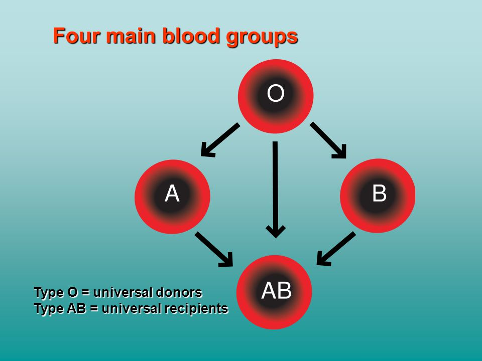 Four main blood groups Type O = universal donors Type AB = universal recipients
