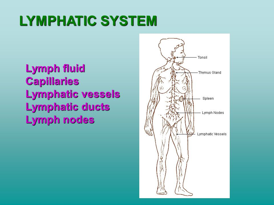 LYMPHATIC SYSTEM Lymph fluid Capillaries Lymphatic vessels