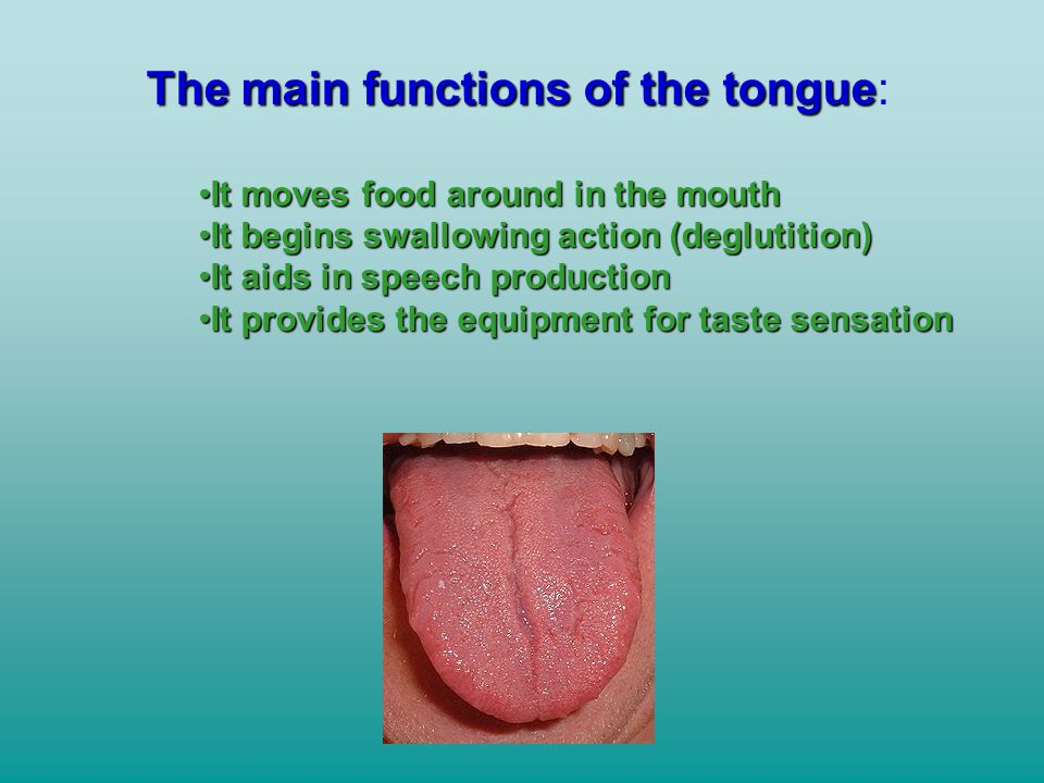 The main functions of the tongue: