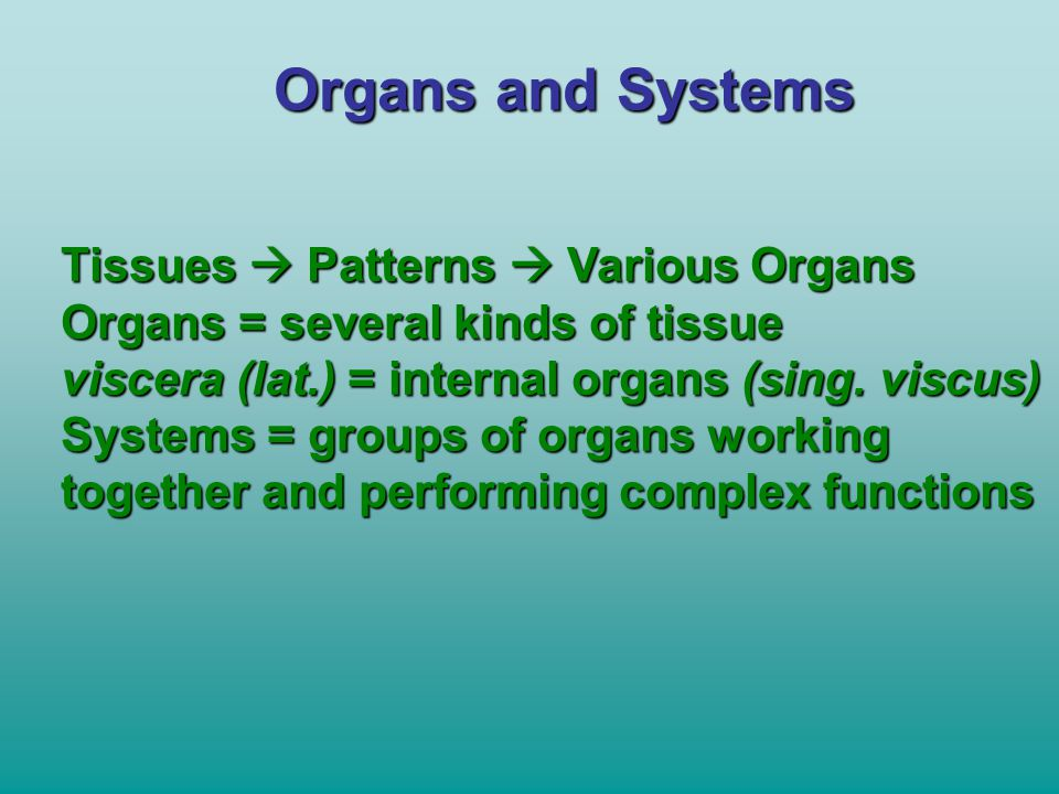 Organs and Systems Tissues  Patterns  Various Organs