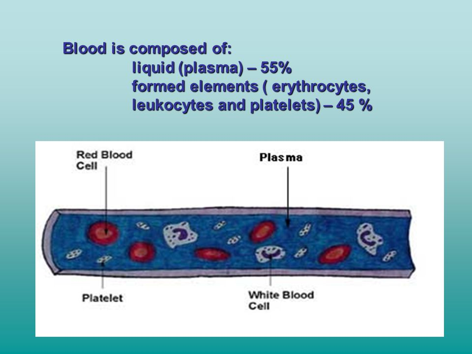 Blood is composed of: liquid (plasma) – 55% formed elements ( erythrocytes, leukocytes and platelets) – 45 %