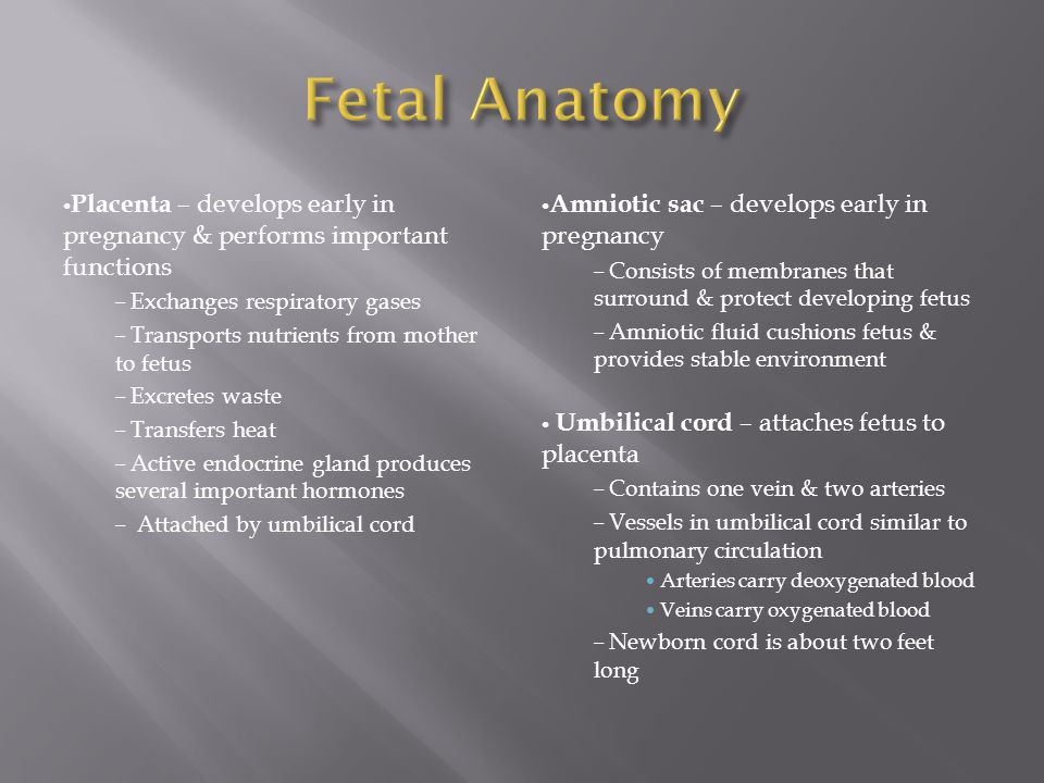 Fetal Anatomy Placenta – develops early in pregnancy & performs important functions. Exchanges respiratory gases.