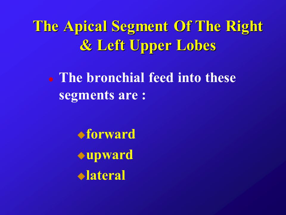 The Apical Segment Of The Right & Left Upper Lobes