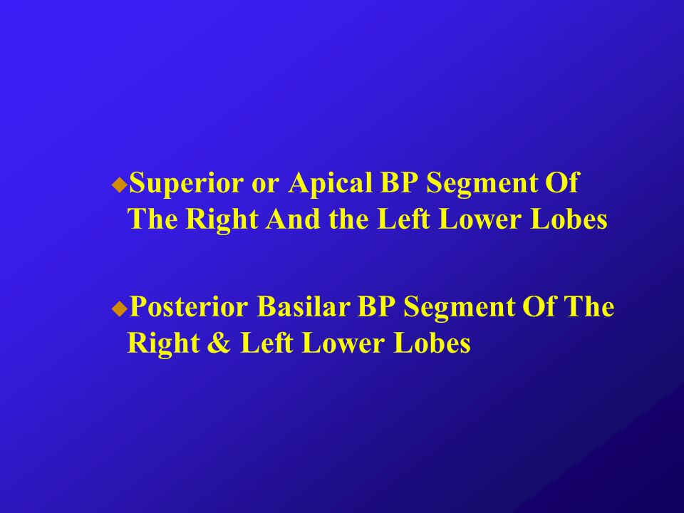Superior or Apical BP Segment Of The Right And the Left Lower Lobes