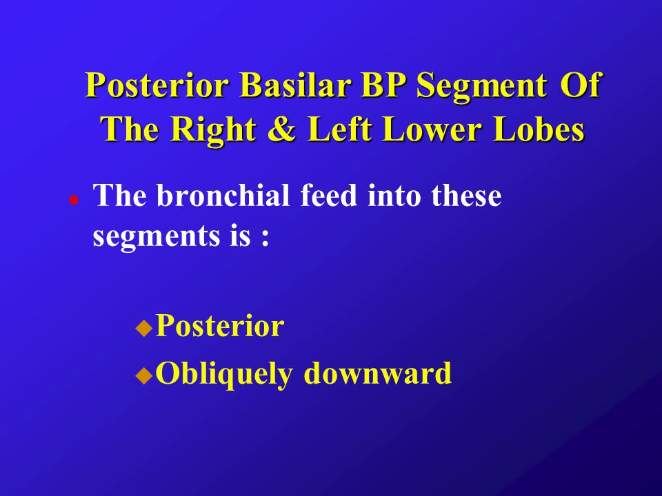 Posterior Basilar BP Segment Of The Right & Left Lower Lobes
