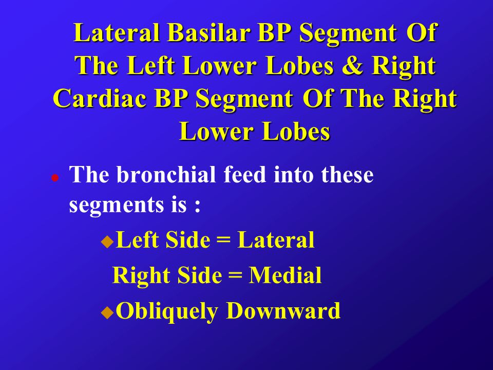 Lateral Basilar BP Segment Of The Left Lower Lobes & Right Cardiac BP Segment Of The Right Lower Lobes