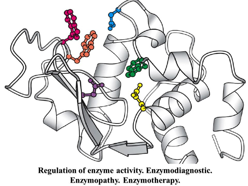 Regulation of enzyme activity. Enzymodiagnostic. Enzymopathy