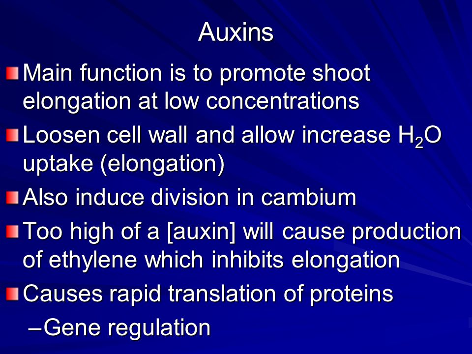 Auxins Main function is to promote shoot elongation at low concentrations. Loosen cell wall and allow increase H2O uptake (elongation)