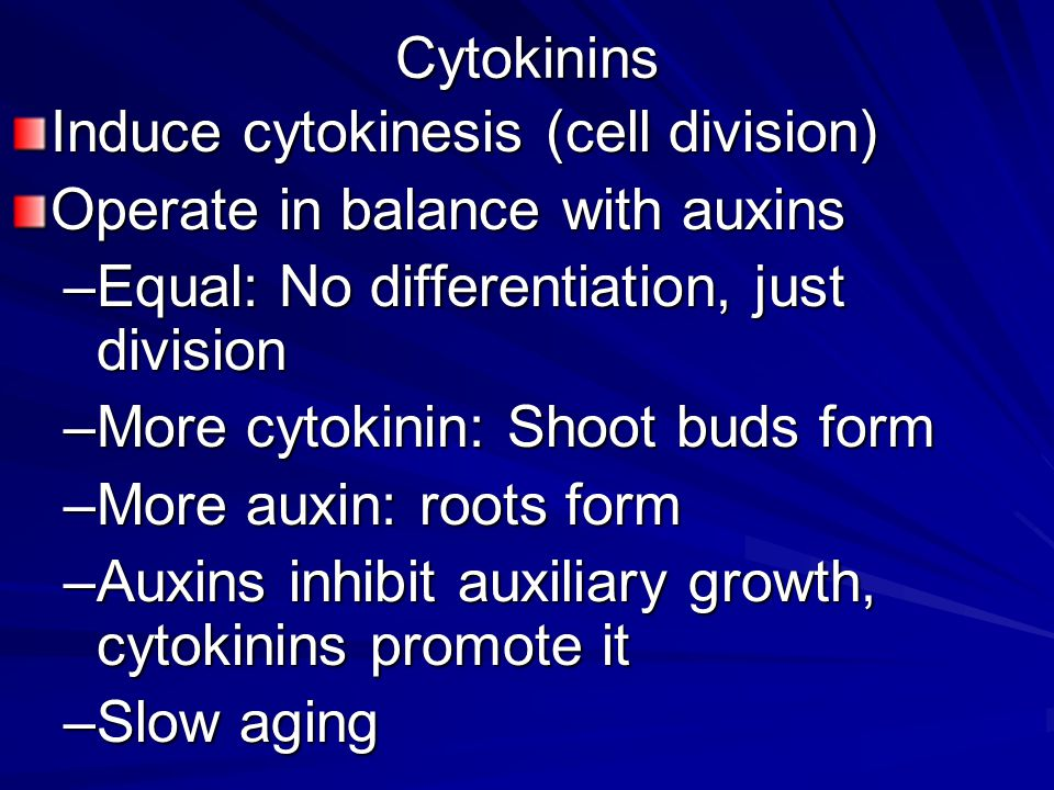 Cytokinins Induce cytokinesis (cell division) Operate in balance with auxins. Equal: No differentiation, just division.