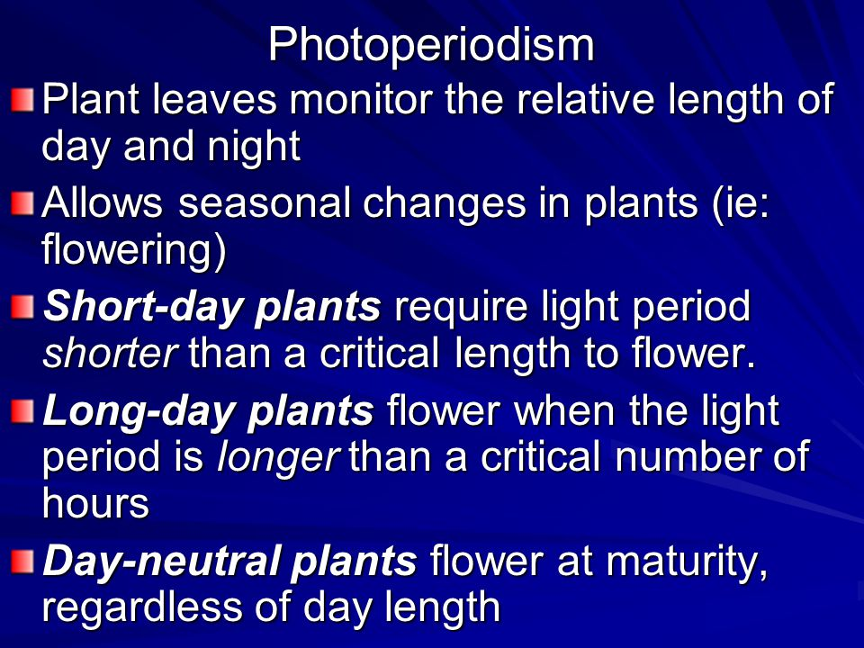 Photoperiodism Plant leaves monitor the relative length of day and night. Allows seasonal changes in plants (ie: flowering)