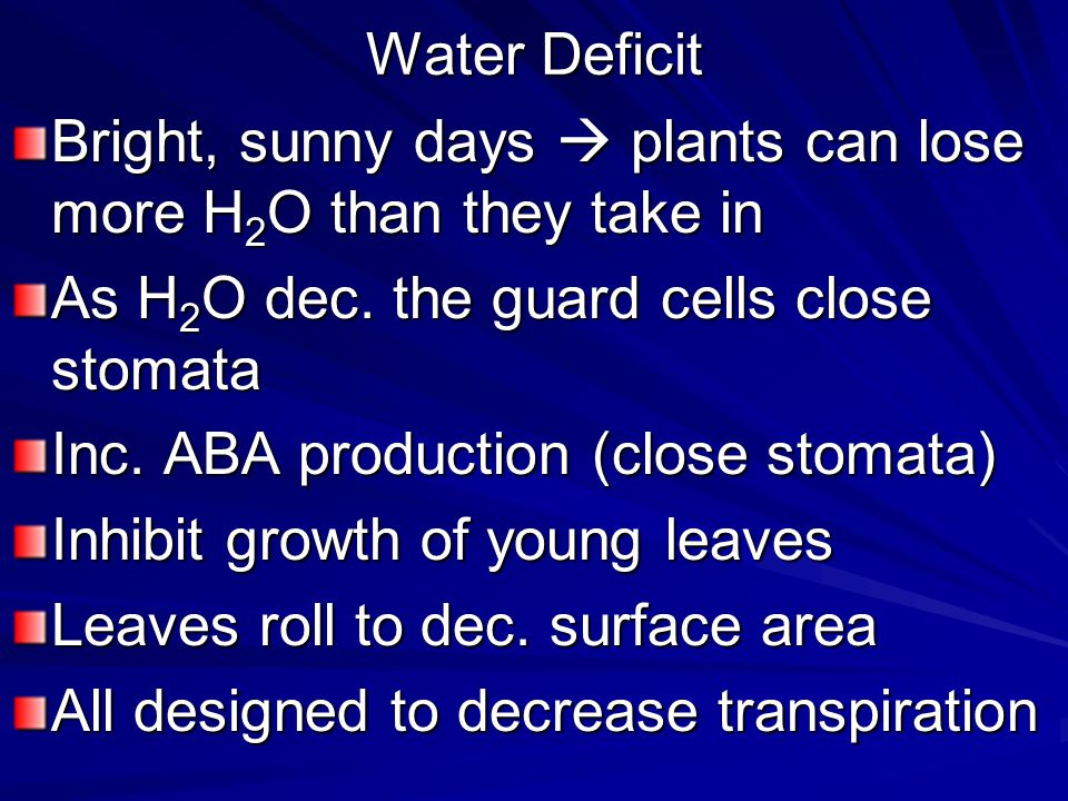 Water Deficit Bright, sunny days  plants can lose more H2O than they take in. As H2O dec. the guard cells close stomata.
