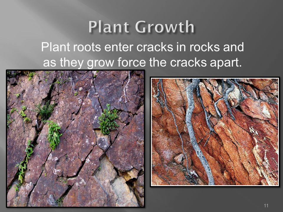 Plant Growth Plant roots enter cracks in rocks and as they grow force the cracks apart.