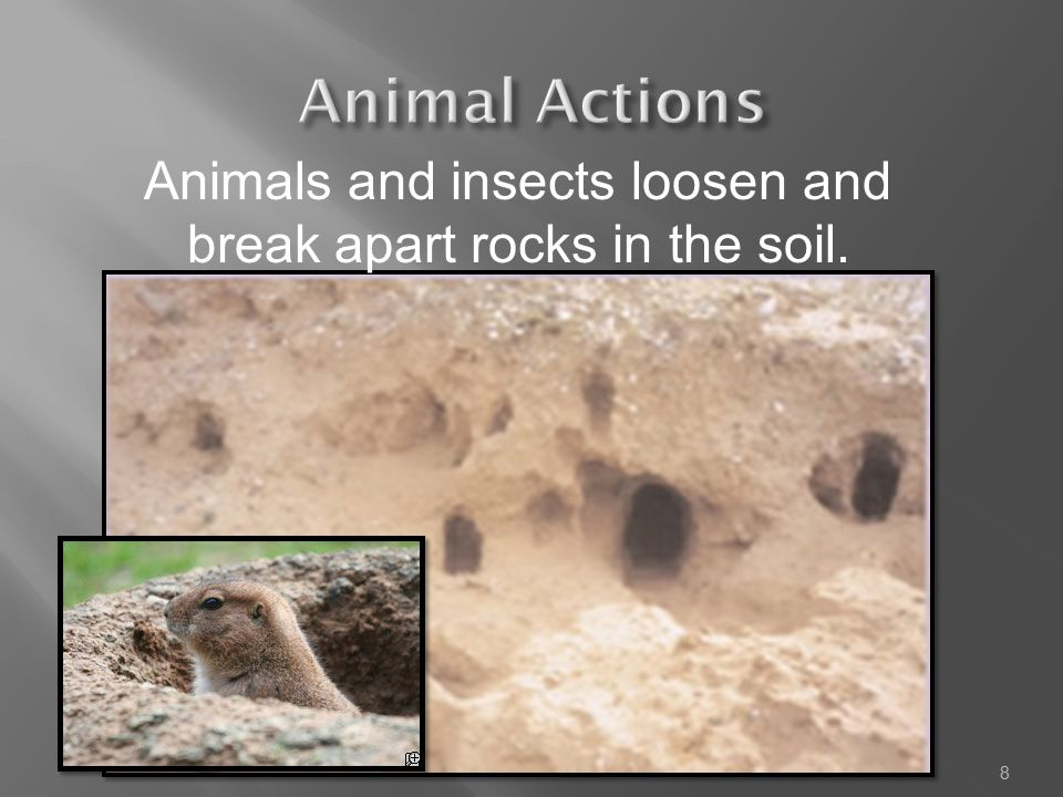 Animals and insects loosen and break apart rocks in the soil.