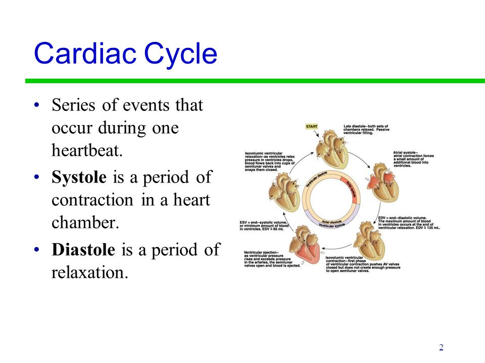 Cardiac Cycle Series of events that occur during one heartbeat.