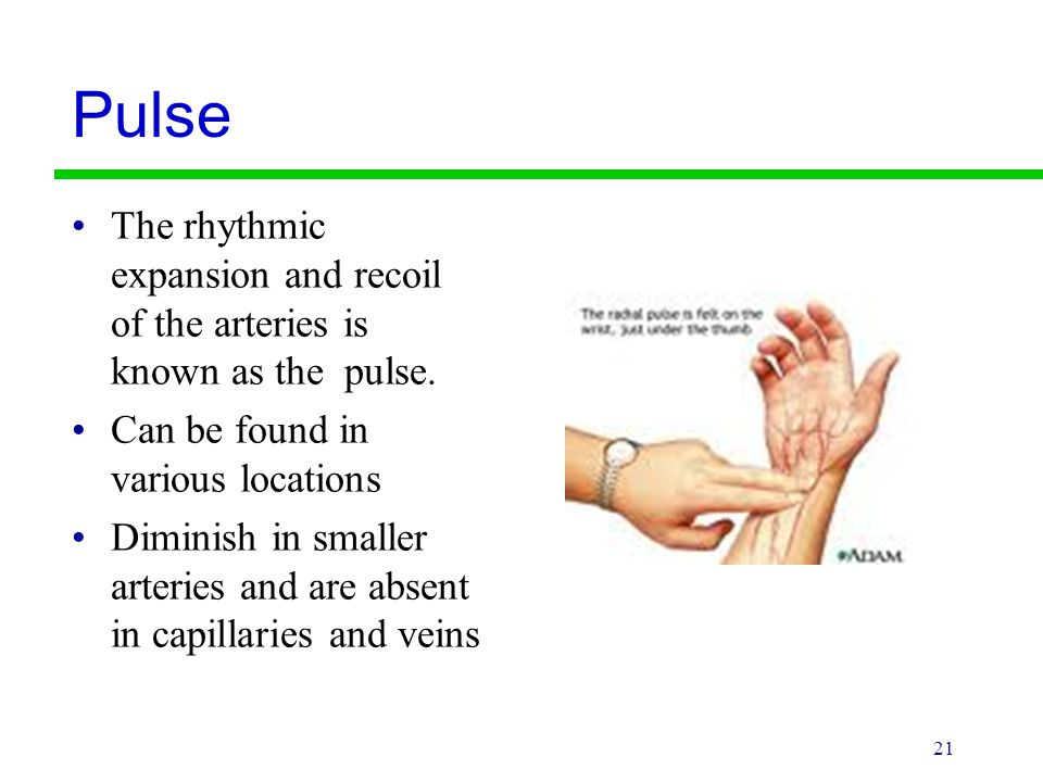 Pulse The rhythmic expansion and recoil of the arteries is known as the pulse. Can be found in various locations.