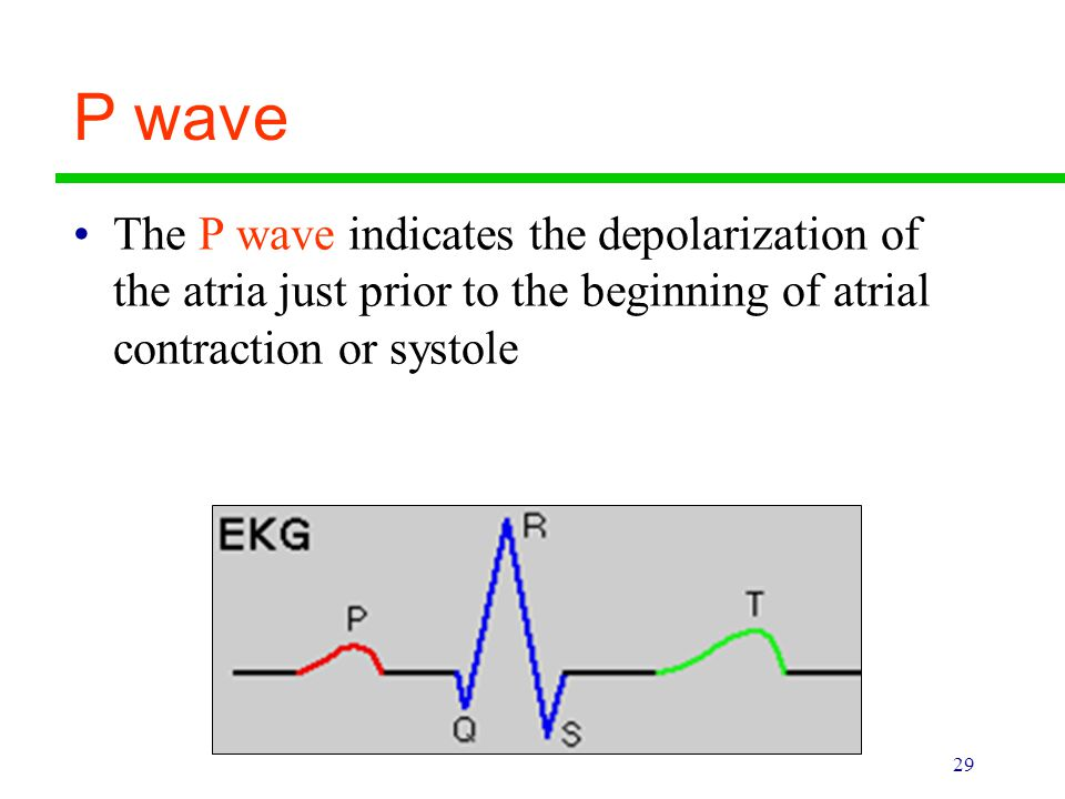 P wave The P wave indicates the depolarization of the atria just prior to the beginning of atrial contraction or systole.