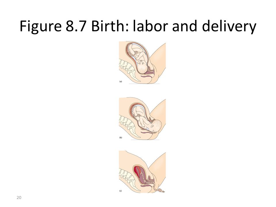 Figure 8.7 Birth: labor and delivery