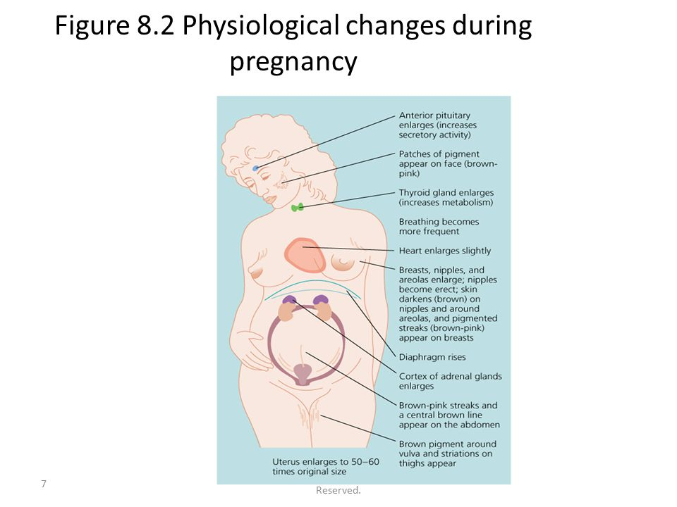 pregnancy Breasts during