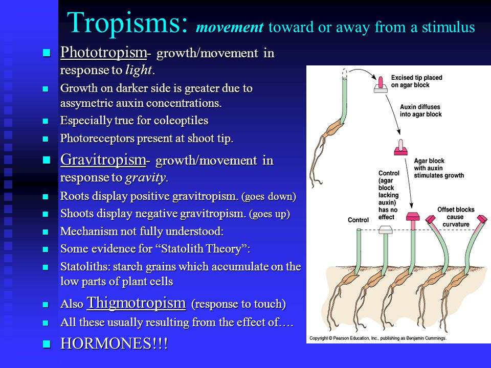 Tropisms: movement toward or away from a stimulus