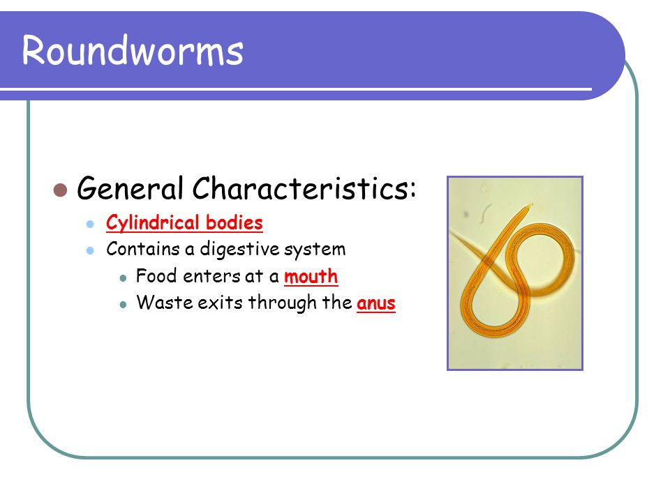 Roundworms General Characteristics: Cylindrical bodies