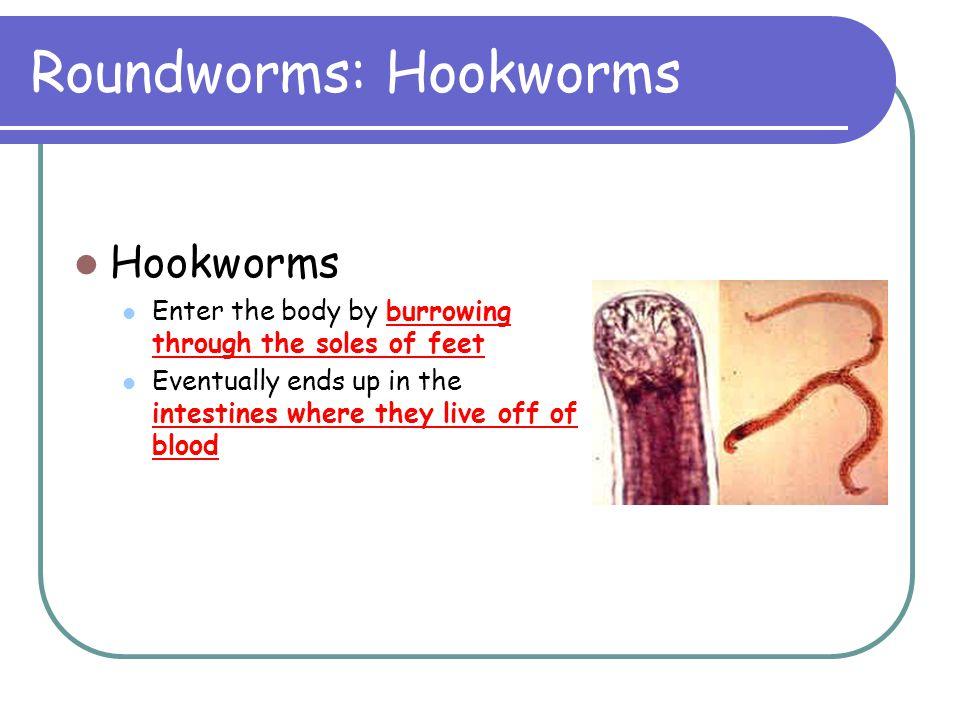 Roundworms: Hookworms