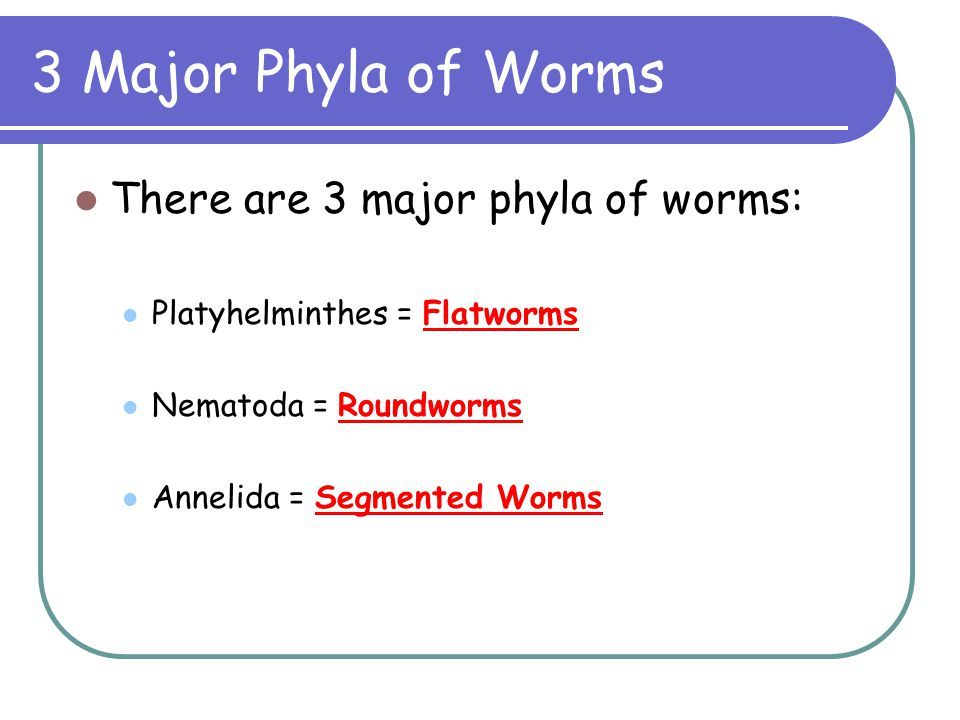 3 Major Phyla of Worms There are 3 major phyla of worms: