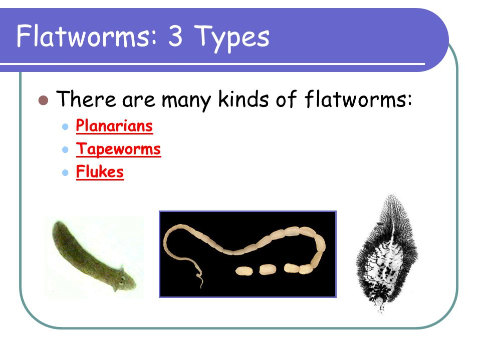 Flatworms: 3 Types There are many kinds of flatworms: Planarians