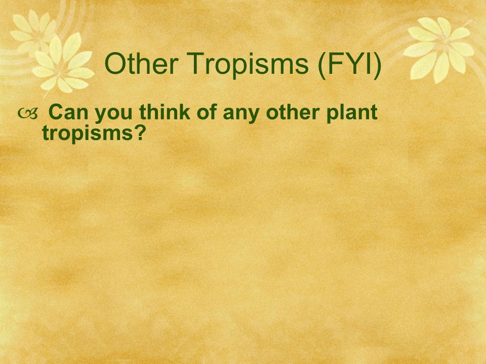 Other Tropisms (FYI) Can you think of any other plant tropisms
